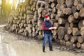 foto of lumber  - Young lumber engineer standing with notebook beside cut trunk stock - JPG