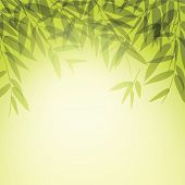 stock photo of bamboo leaves  - Bamboo trees and leaves at sunset time - JPG