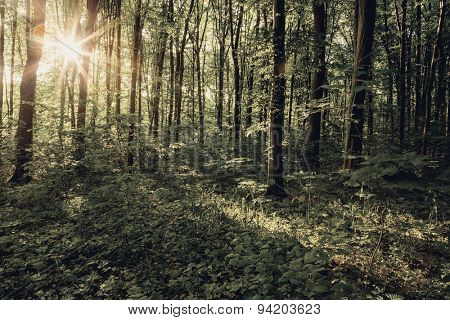 Vintage forest trees. nature green wood, sunlight backgrounds.