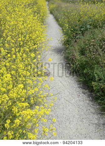 Floral Rural Pathway