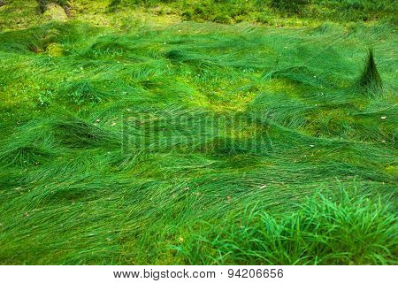 Wild grass in forest. Vibrant green colors.