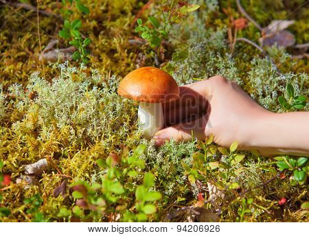 Young woman picking mushroom in grass in forest close-up view.