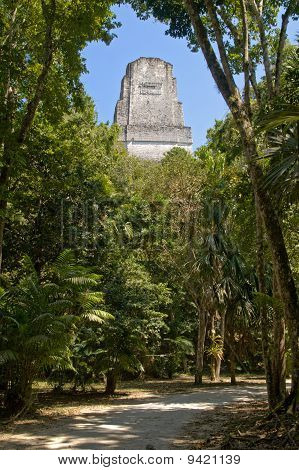Temple Iii In The Jungle Of Tikal Peten National Park