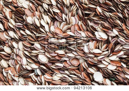Seashells As Background,