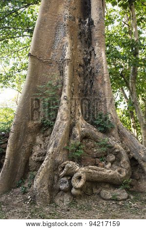 Roots Of A Tropical Tree.