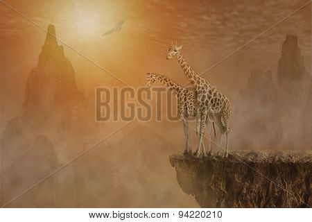 Two Giraffes At  The High Mountain