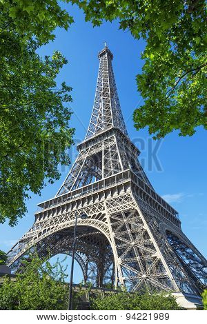 Eiffel Tower And Trees
