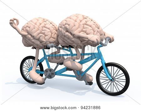Two Brains Riding Tandem Bicycle