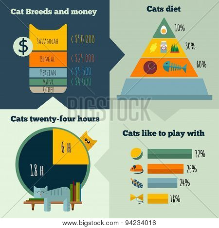 Vector flat cats life infographic