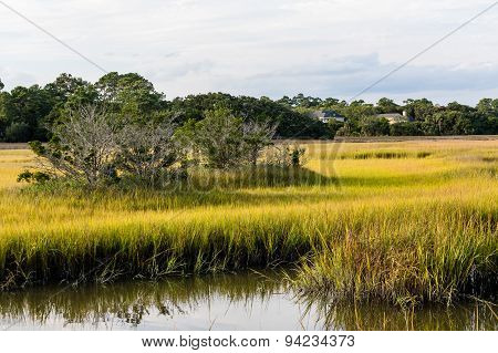 Trees In Wetland Marshes