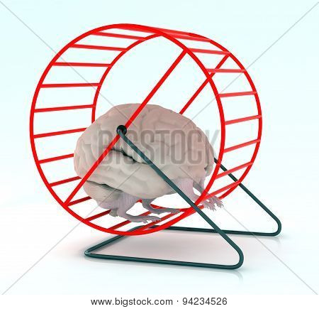 Brain In Hamster Wheel