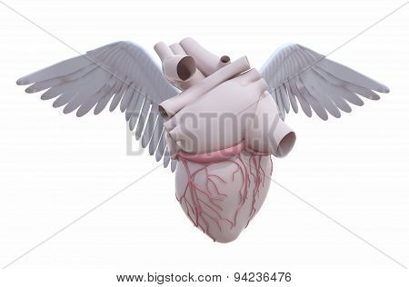 Human Heart With Wings