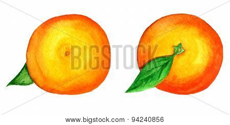 Set Of 2 Vector Watercolor Tangerines Isolated On White Background, Top And Bottom View