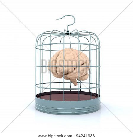 Brain In Birdcage