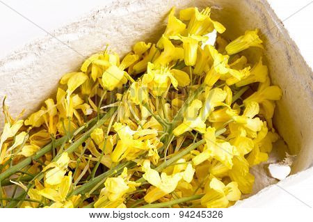 Edible Cabbage Flowers