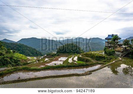 Rice Paddies In The Mountains