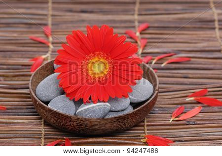 Red gerber with gray stones in bowl on mat,petals