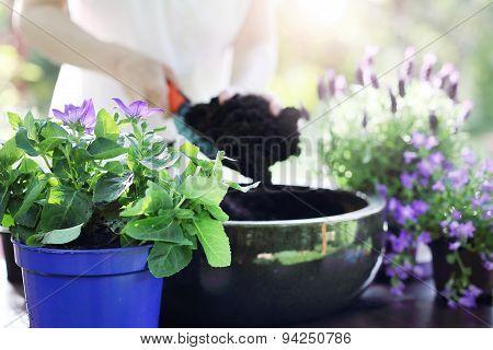 Transplanting plants