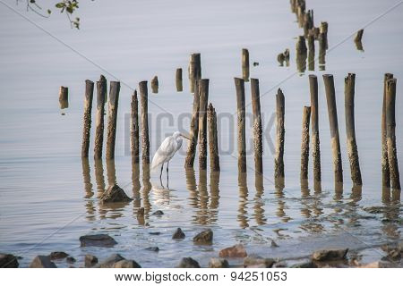 egrets play in sunset