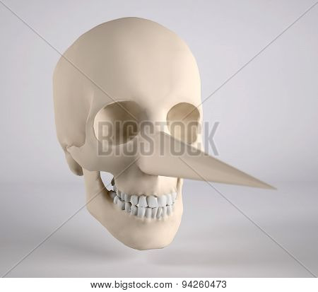 Human Skull With Big Nose