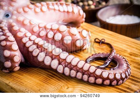 Whole Fresh Raw Octopus   With Tentacles Closeup