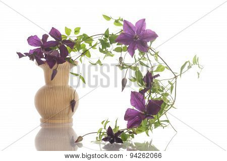 Beautiful Blooming Clematis