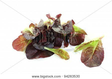 Fresh Crunchy Red Lettuce
