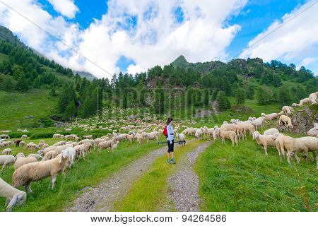 Girl looks at flock of sheep in the mountains