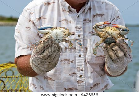 Fisherman showing his crab catch.