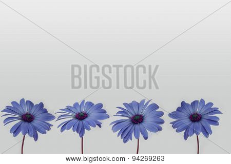 flowers in a row - isolated on white