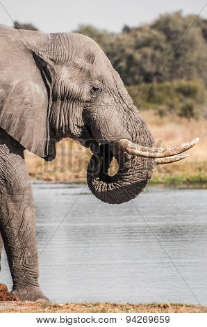 Elephant By The River