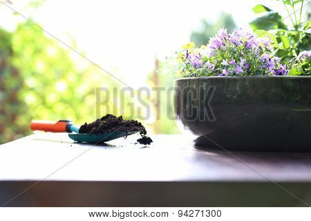 Take care of your plants