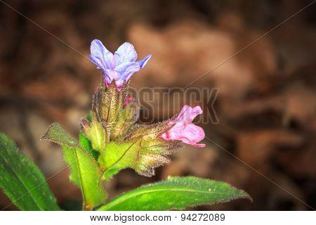 Abstract wild flowers macro photo
