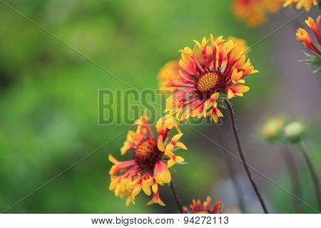 nice flowers in garden macro photo
