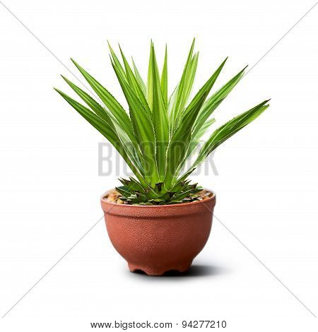 Houseplant Isolated