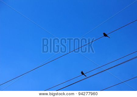 Two Birds On Power Transmission Lines Against Bright Blue Sky