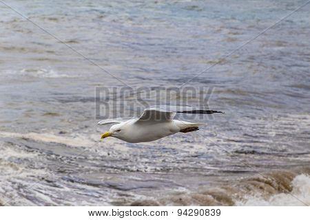 Seagurl