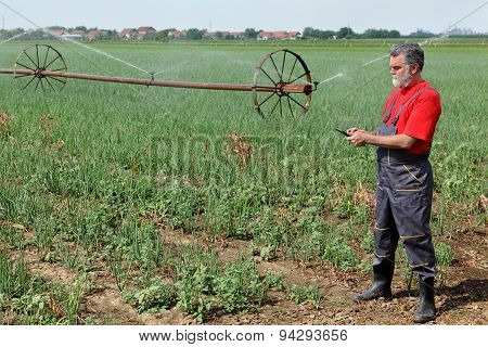 Agricultural Scene, Farmer In Onion Field With Watering System