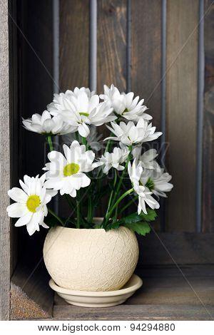 Beautiful chrysanthemum in pot in wooden crate