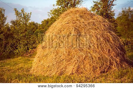 Stack of dried hay