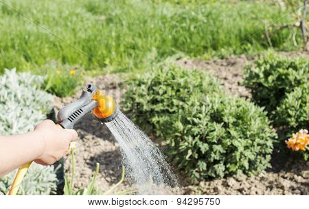 Watering Water From A Hose Garden Flowers