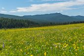 picture of cloud forest  - Beautiful mountain landscape with wild flowers in the meadow on a background of mountains forest and blue sky with clouds - JPG