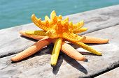 pic of starfish  - some different starfishes on an old wooden pier on the sea - JPG