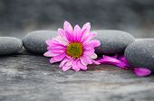 picture of driftwood  - driftwood texture and pink flower  - JPG