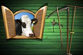 foto of cow head  - Wooden wall with old farm tools and an open window with a head of cow - JPG