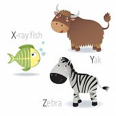 picture of animal x-ray  - Illustration of alphabet with animals from X to Z - JPG