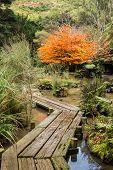 pic of wetland  - Wetland area with a wooden board walkway going through it - JPG