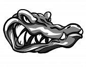 picture of alligators  - Alligator mascot - JPG