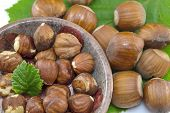 image of hazelnut  - Raw hazelnuts in a bowl with a green leaf - JPG