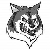 stock photo of white wolf  - Wolf mascot - JPG